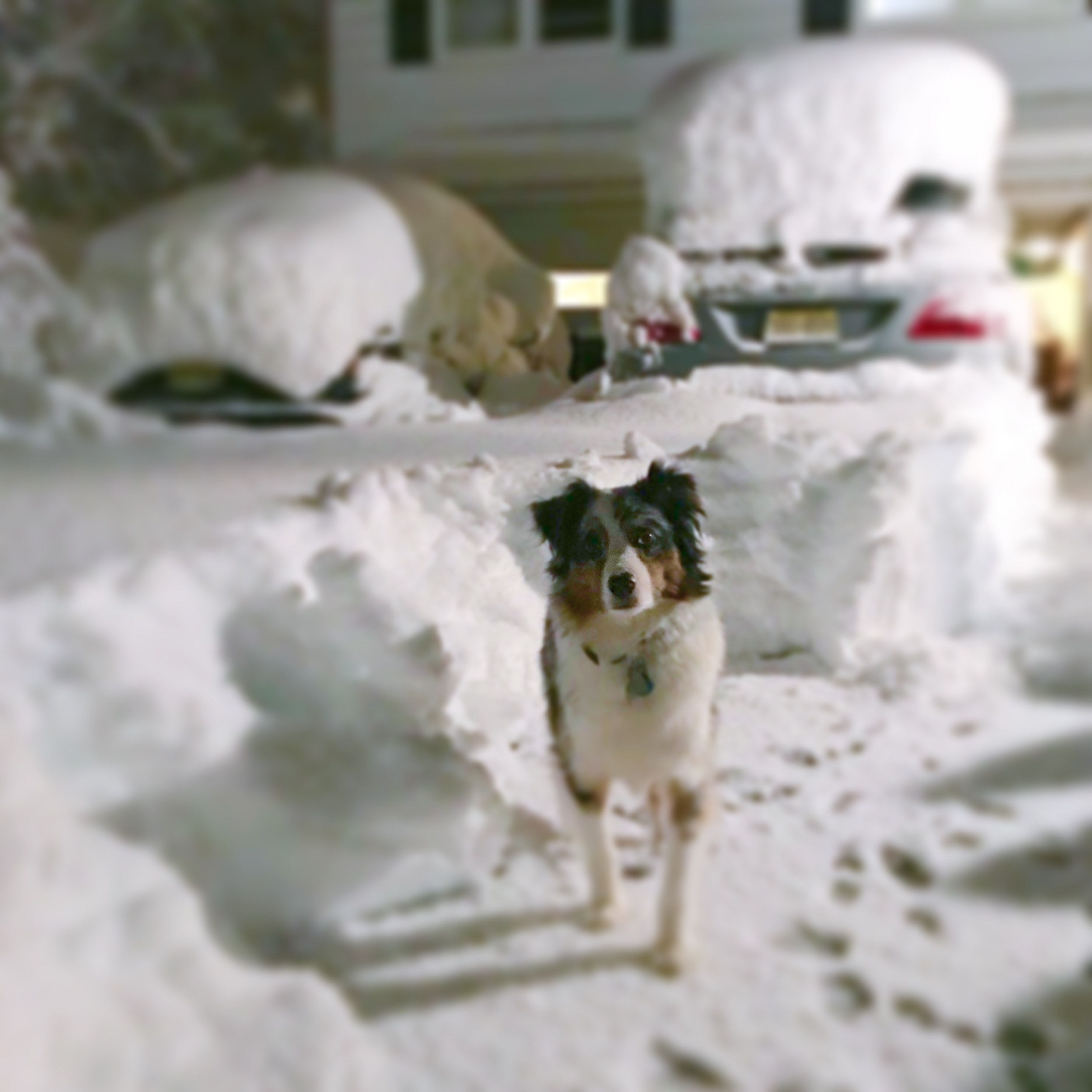 ozzimusprime ozzy snow storm nor'easter