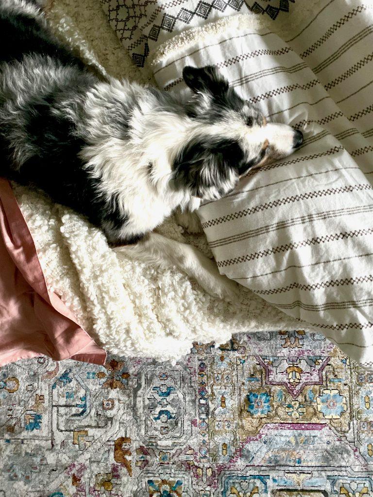 Christine Kohut Interiors, design ninja, #designninja, #ckdesignninja, ORC, one room challenge, better homes and gardens, design blog, bedroom makeover, guest bedroom ideas, ozzy, australian shepherd, bedding, boho, bohemian style, california style